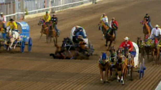 The lead horse in a chuckwagon race falls during the Calgary Stampede on Thursday, July 12, 2012.