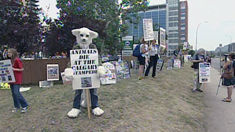 A person in a costume holds a sign protesting the Calgary Stampede in this photo from video in Calgary, Saturday, July 14, 2012.
