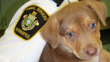 Rescued dog Mandy
