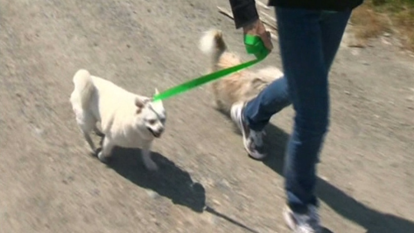 Jacqui Simenson, 75, walks her pet dogs Bear and Teddy. (CTV News)