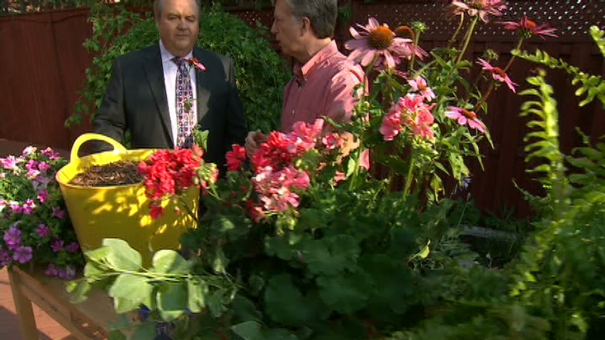 Gardening guru Mark Cullen shows Canada AM how to care for plants during a heat wave, Wednesday, July 18, 2012.