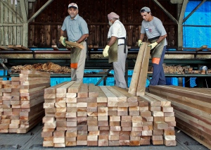 Workers pull graded lumber off a conveyor belt at a mill in Richmond, B.C., in this 2006 file photo. (Richard Lam/THE CANADIAN PRESS)