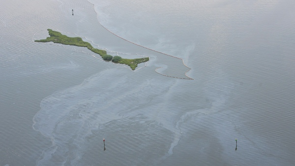 Oil from the Deepwater Horizon disaster is visible in Barataria Bay, Thursday Aug. 5, 2010. (AP / Kerry Maloney)