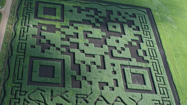 An aerial photo shows the Kraay Family Farm's corn maze, featuring a giant QR code - linking users to the website for the farm. Supplied.