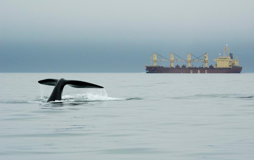 New England Aquarium, whale, Canada, Bay of Fundy