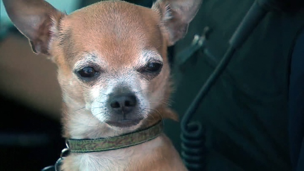 Dog left in hot car