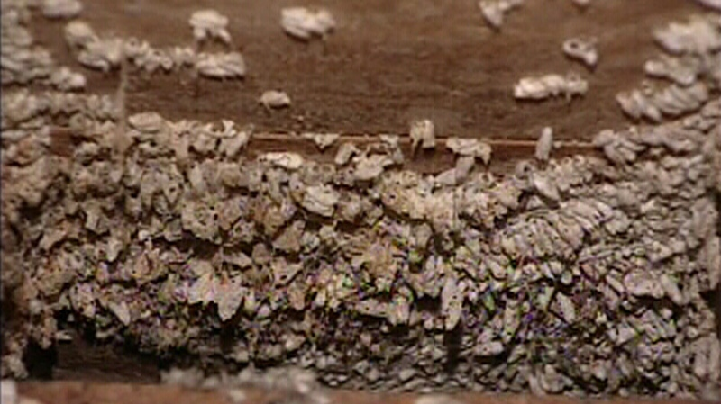 Thousands of bees built a hive in the ceiling of an Ontario home.