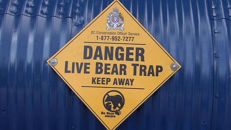 A live trap is set up in North Vancouver after a bear went into a home through an open door. Aug. 6, 2012. (CTV)