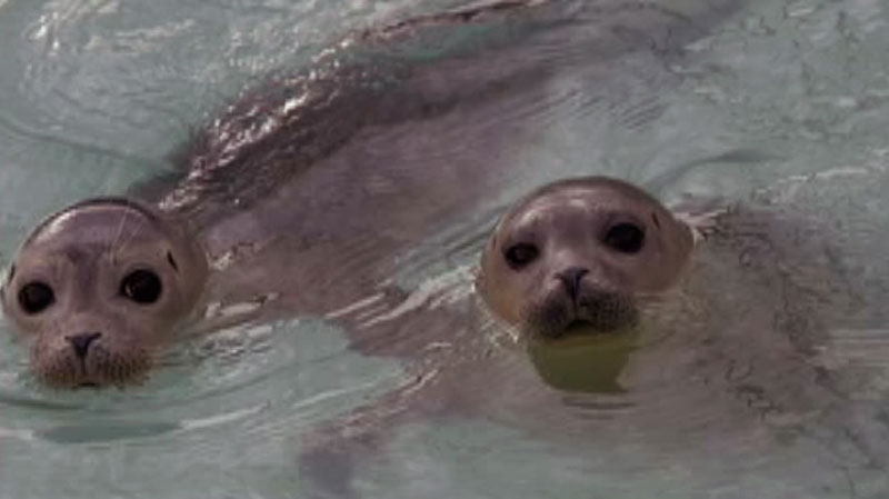 Seals are shown in this file photo.