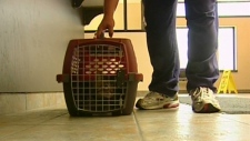 K-W Humane Society put under medical quarantine