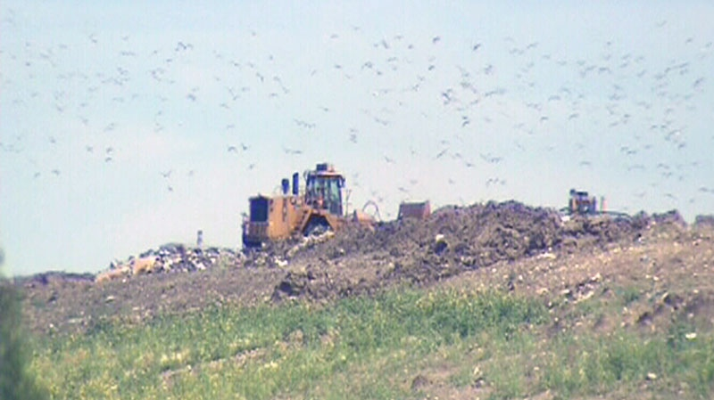 A tractor plows through sea gulls in a landfill in Winnipeg, Man., in this undated photo from video.