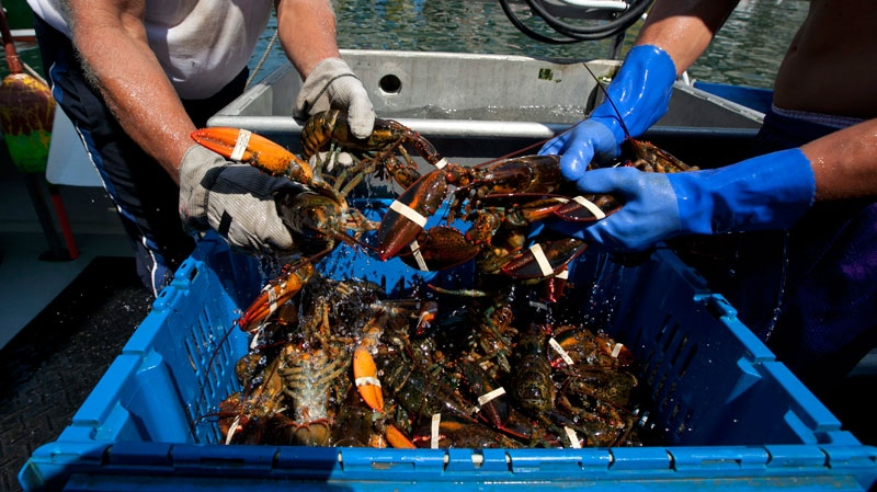 Lobsters are unloaded from a fishing boat in Portland, Maine, Thursday, Aug. 9, 2012. (AP / Robert F. Bukaty)