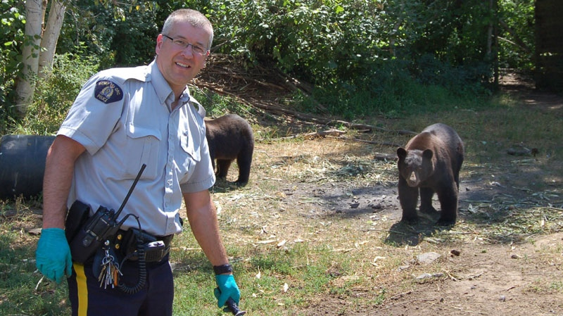 A RCMP officer poses for a photo, as bears walk towards him, near a marijuana grow op in Christina Lake, B.C. on Friday July 30, 2010. (THE CANADIAN PRESS/RCMP-HO)