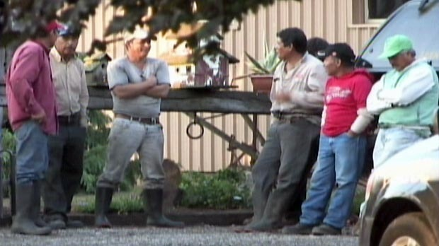 Farm workers stand near the area where a man was struck by lightning in Norfolk County, Ont. on Wednesday, Aug. 15, 2012.