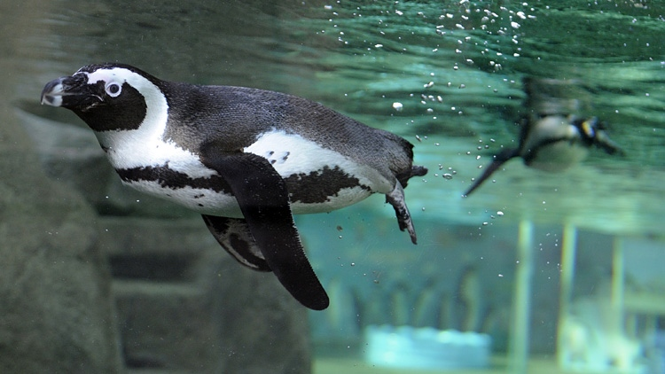 New lease means aquarium can stay in Stanley Park another 35 years