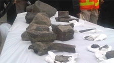 These fossils were displayed by the City of Edmonton following a dinosaur find last week in Quesnell Heights.