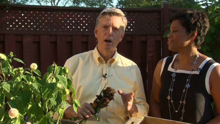 Gardening expert Mark Cullen answered viewer questions on Aug. 22, 2012 on Canada AM.