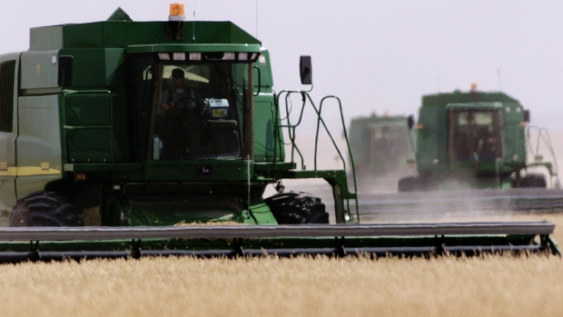 Harvesters work a wheat field
