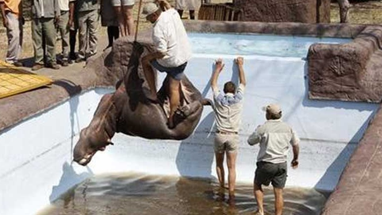 Hippo dies in South Africa