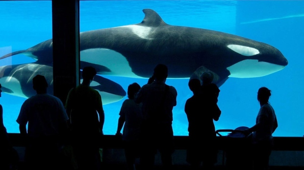 Marineland not yet in the clear, investigation still ...