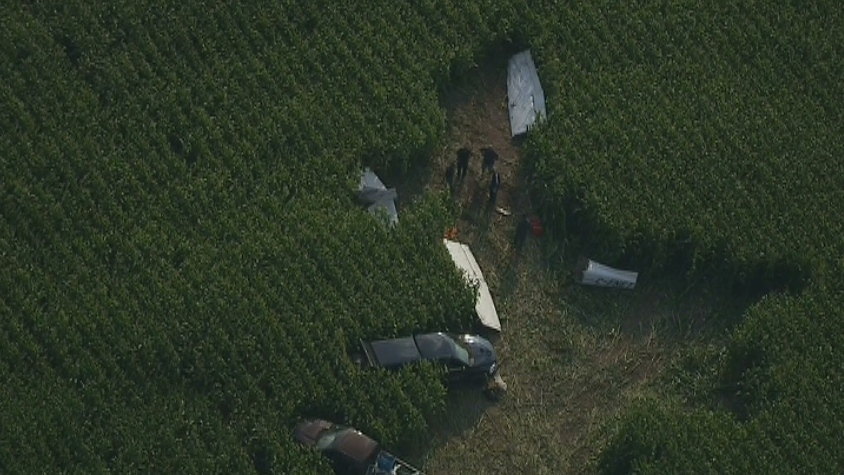 Transportation Safety Board officials are investigating after a Cessna 172 plane crashed into a cornfield in Moorefield, Ont., on Aug. 25, 2012. (CTV News)