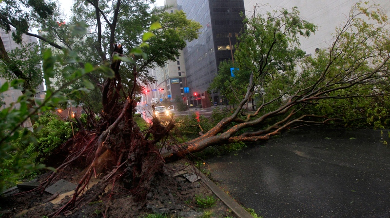 An uprooted tree lies across Poydras St. downtown after Hurricane Isaac made landfall in New Orleans, Wednesday, Aug. 29, 2012. (AP / Gerald Herbert)