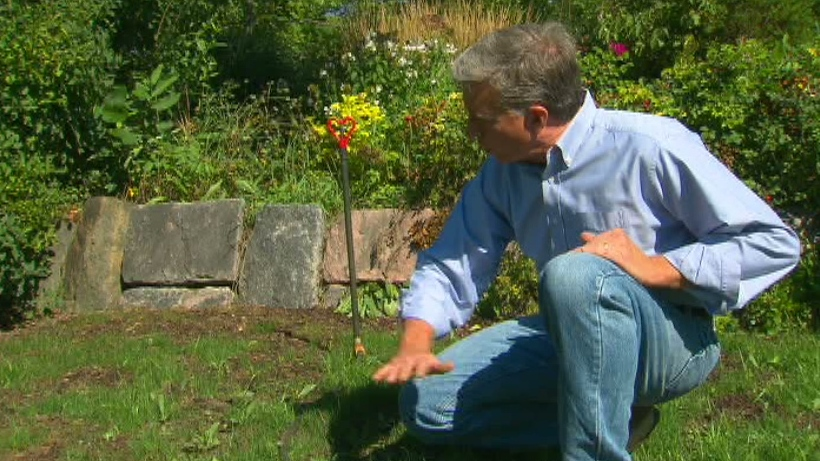 Mark Cullen shared his tips on reviving a dry summer lawn on Canada AM, Aug. 29, 2012.