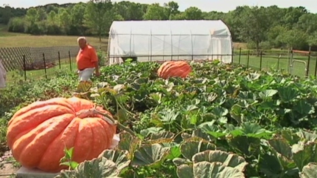 Extended: Growing the world's biggest pumpkin