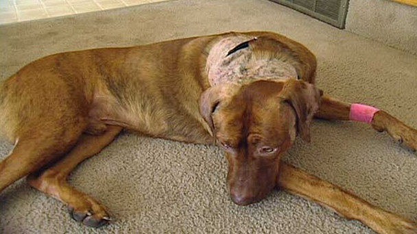 Calgary Dog Breed Ban