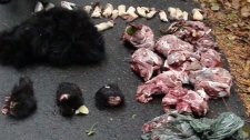 A large amount of discarded animal parts were found Mon. Sept. 2, in the Pacific National Rim Park Reserve on Vancouver Island. (Handout/Parks Canada)