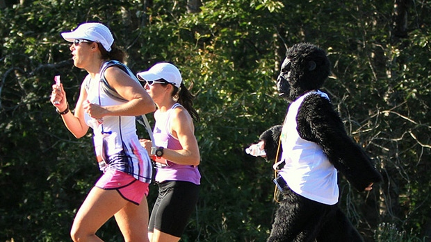 Edmontonians take part in the Edmonton Gorilla Run. PHOTO: Robert Antoniuk.