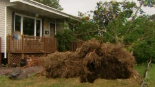 A resident's tree is uprooted in the backyard in St. John's, N.L., on Tuesday, Sept. 11, 2012.