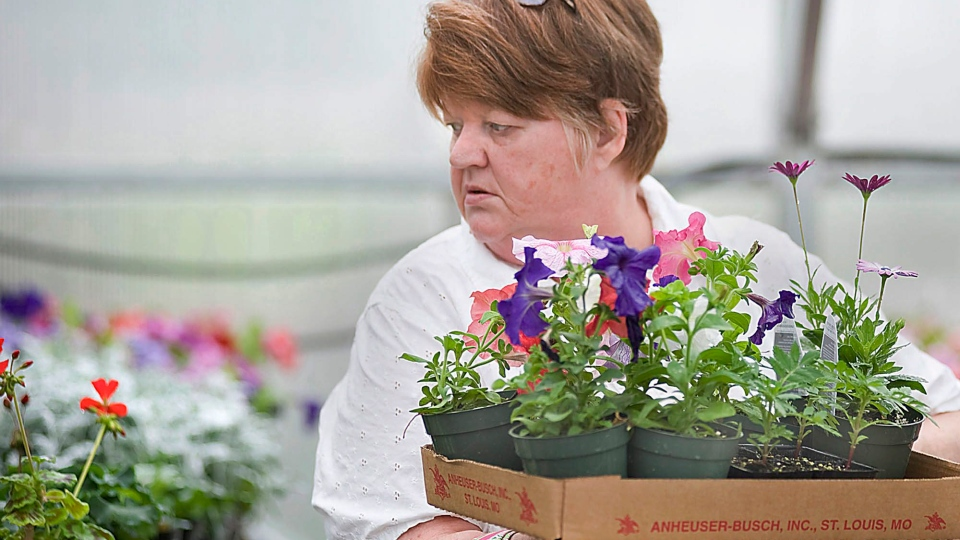 A woman buys a variety of annuals and perennials Thursday, May 3, 2012, at the State Fair Community College Horticulture Club's spring flower sale at the Potter-Ewing Agriculture Building in Sedalia, Mo. (AP / Sedalia Democrat, Sydney Brink)