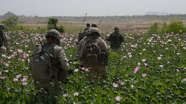 Canadian Soldiers of the Operational Liaison and Mentoring Team, left, and Soldiers of the Afghan National Army walk through a poppy field during an operation in the Panjwayi district, Afghanistan. (Department of National Defence)