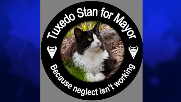 A Tuxedo Stan button is shown on the website kathychisholm.ca