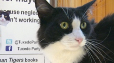Feline politics: Tuxedo Stan the cat enters Halifax mayoral race