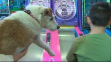 Bingo's days may be numbered, but his young owner is making sure the now world-famous service dog en