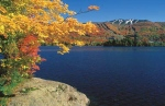 Sugar maple trees are a stunning sight to see during the fall months, as the leaves turn a vibrant, fiery red.