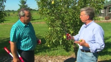 Gardening expert Mark Cullen shares tips on how to prune pear and apple trees on Canada AM, Sept. 19