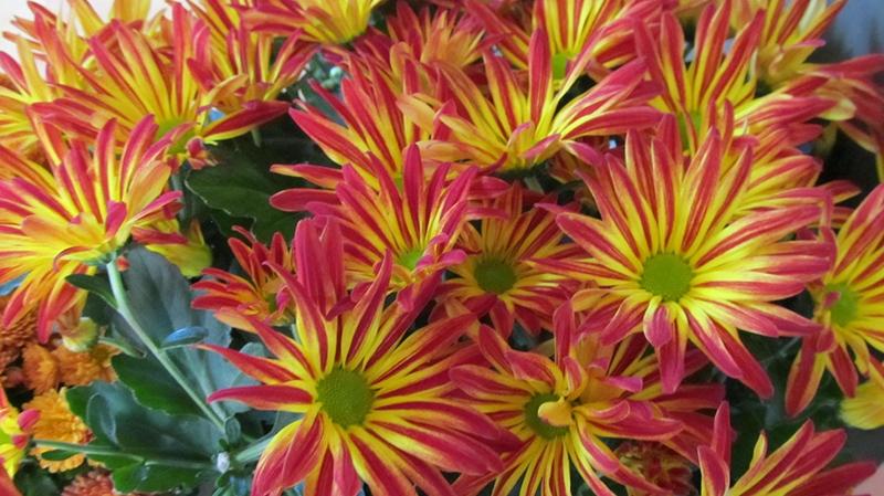Viewer photo - flowers