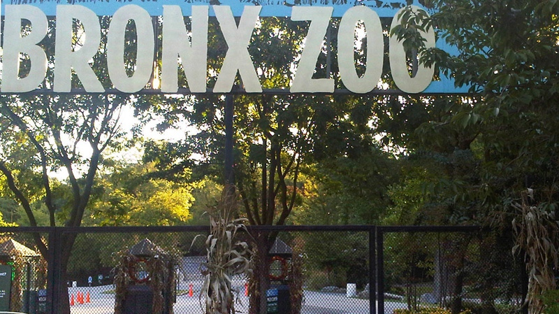 The ticket booths are empty and the gates are chained shut at an entrance to the Bronx Zoo in New York, Friday, Sept. 21, 2012. Zoo officials say a visitor who leaped into an exhibit and was mauled by a tiger was alone with the 400-pound beast for about 10 minutes before being rescued. (AP Photo/Jim Fitzgerlad)