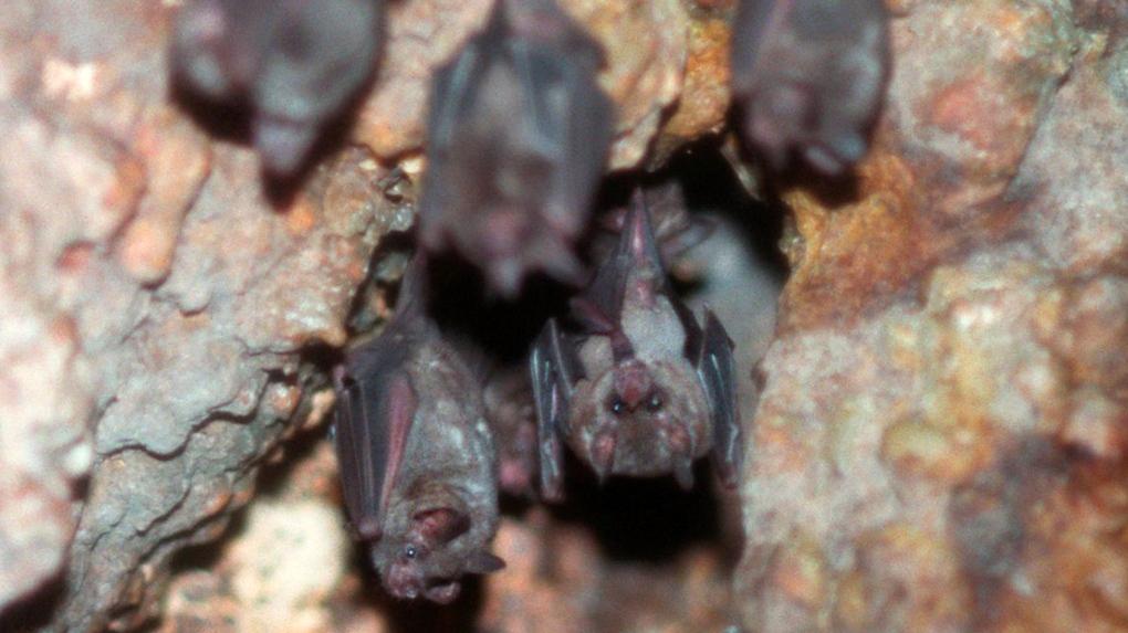 B.C. man dies of rabies in 1st confirmed case since 2003