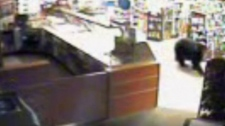A bear broke into a store in Radium Hot Springs, B.C. on Sept. 27, 2010. (Youtube)