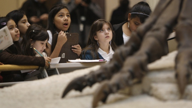 School children get a close-up look at the Tyrannosaurus rex skeleton known as Sue on display at Chicago's Field Museum Wednesday, May 12, 2010 in Chicago. (AP Photo / Kiichiro Sato)