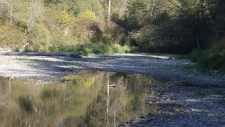 B.C.'s Cowichan River in danger of drying up