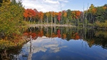A pond in Gatineau Park, not far from Pink Lake, with autumn's colours in the background and reflected in the water. (Viewer photos submitted by: Paul Page)