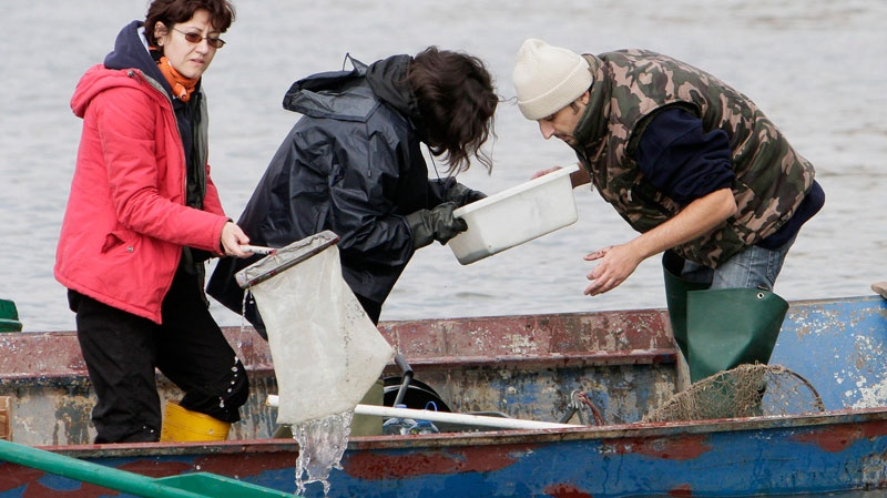 Biologists of the Romanian Waters Authority check samples from the Danube in Bazias, western Romania, Friday, Oct. 8, 2010. (AP / Vadim Ghirda)