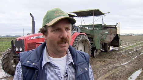 Bill Zymans expects to lose 80 per cent of his potato crop this year because of heavy rain. Oct. 9, 2010. (CTV)