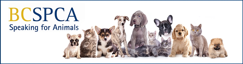 Image result for be kind to animals month spca